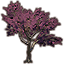 Alinor Maple, Purple